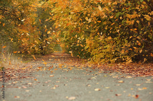 Fototapeta Trees and bushes with colorful leaves near rural road on autumn day