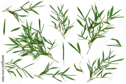 Canvastavla  Bamboo green fresh leaves big kit on white background