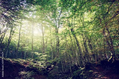 Montage in der Fensternische Pistazie Wide angle of a green forest with sun light