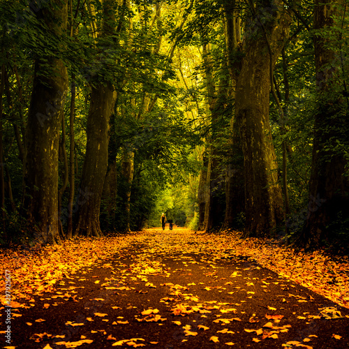 Garden Poster Road in forest Forest