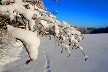Trees Covered With Snow On Fro...