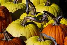 Many Pumpkins And Gourds Together In A Patch