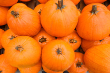 Flat Lay, Many Pumpkins For Sale For Halloween.