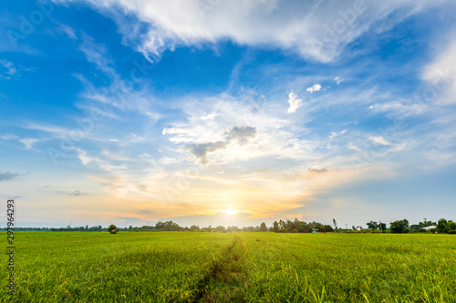 Obraz Beautiful environment landscape of green field cornfield or corn in Asia country agriculture harvest with sunset sky background. - fototapety do salonu