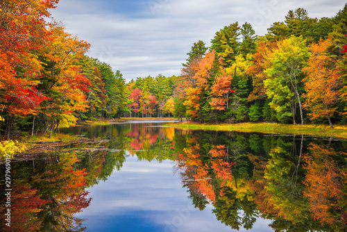 Poster Trees Colorful foliage tree reflections in calm pond water on a beautiful autumn day in New England
