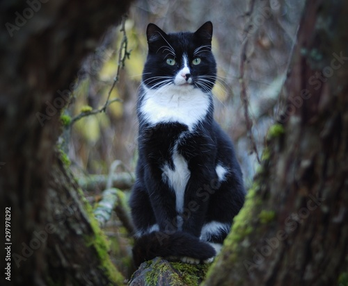 black cat on a tree in the garden Wall mural