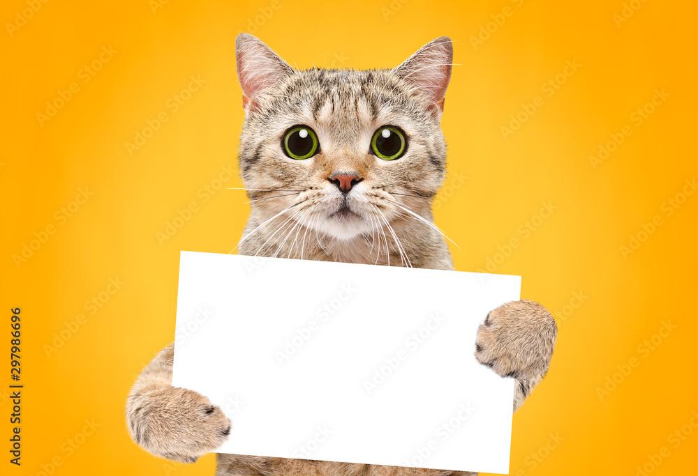 Portret kota szkocki prosto z sztandarem w łapach na pomarańczowym tle