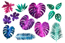 Tropical Leaves Neon Watercolor. Fan Palm. Bright Pink, Turquoise, Blue, Purple Colors.