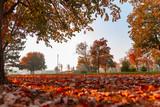 Fototapeta Sport - Autumn park landscape - trees and fallen dry autumn leaves