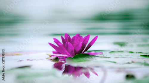 Photo Stands Water lilies pink water lily
