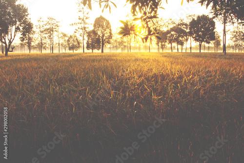 Montage in der Fensternische Cappuccino landscape view. beautiful sunrise on rice field in morning