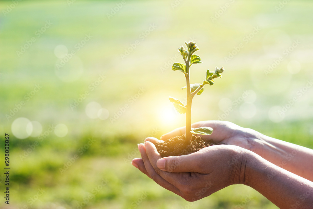 Fototapety, obrazy: Hands holding young plants sprouting and growing on green nature background, Earth Day, new life growth ecology and business financial progress concept.
