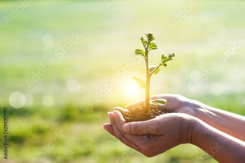 Obraz na plátně  Hands holding young plants sprouting and growing on green nature background, Earth Day, new life growth ecology and business financial progress concept
