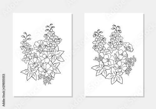 Fotografia vector anemone wind flower delphinium bell leaf coloring book outline illutratio