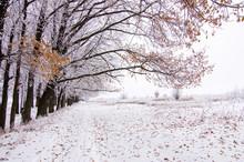 Winter Beautiful Oak Alley Cov...