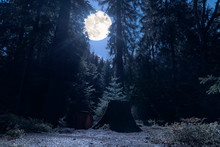 A Romantic Place In The Middle Of The Night In A German Forest At Full Moon. In The Foreground A Sawn Tree With Stump In Bluish Moonlight.
