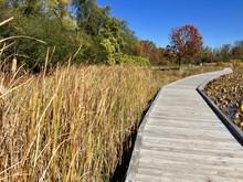 Wooden Boardwalk At Nature Preserve