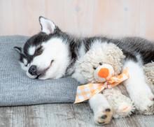 Siberian Husky Puppy Sleeps Wi...