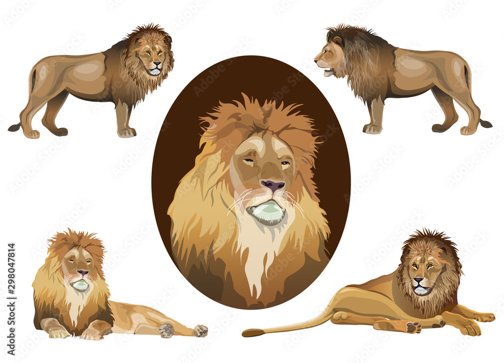 Fototapeta Lion set vector images in realistic style