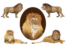 Lion Set Vector Images In Real...