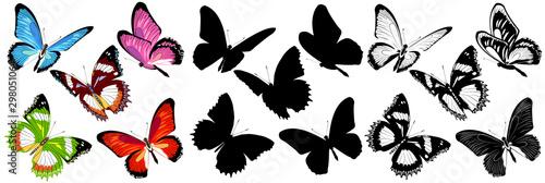 butterfly368 Fototapet
