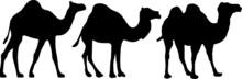 Camel Icon Isolated On White B...