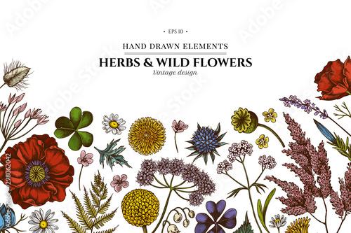 Stampa su Tela  Floral design with colored shepherd's purse, heather, fern, wild garlic, clover,