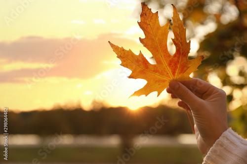Foto auf Gartenposter Gelb Schwefelsäure Woman holding beautiful leaf in park, closeup. Autumn season