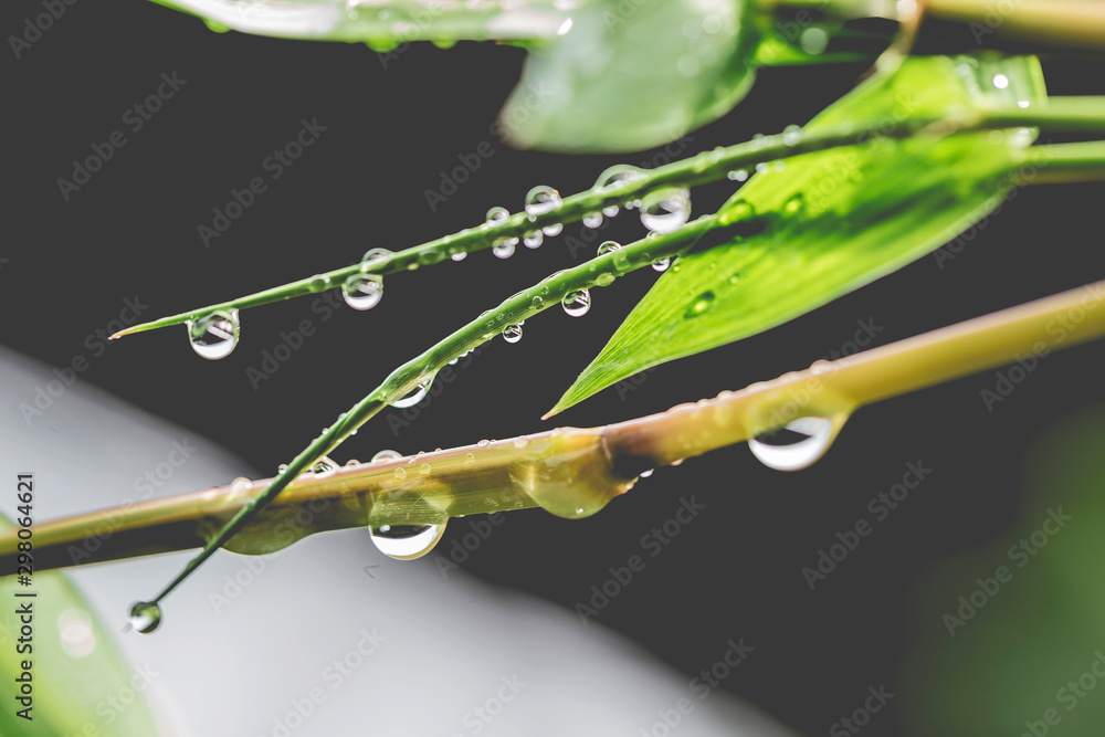 Fototapety, obrazy: The water droplets on the leaves during the rainy season of the rainforest are the source of the ecosystem.