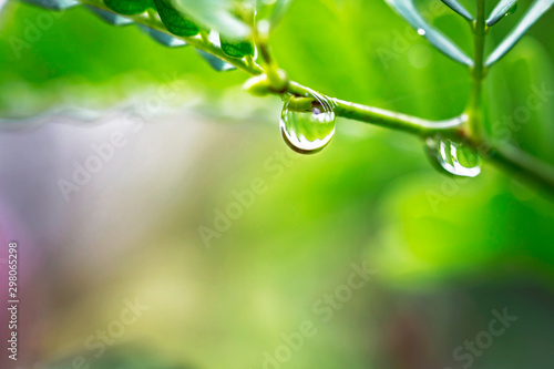 The water droplets on the leaves during the rainy season of the rainforest are the source of the ecosystem Canvas-taulu