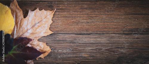 Foglie secche su uno sfondo in legno Billede på lærred