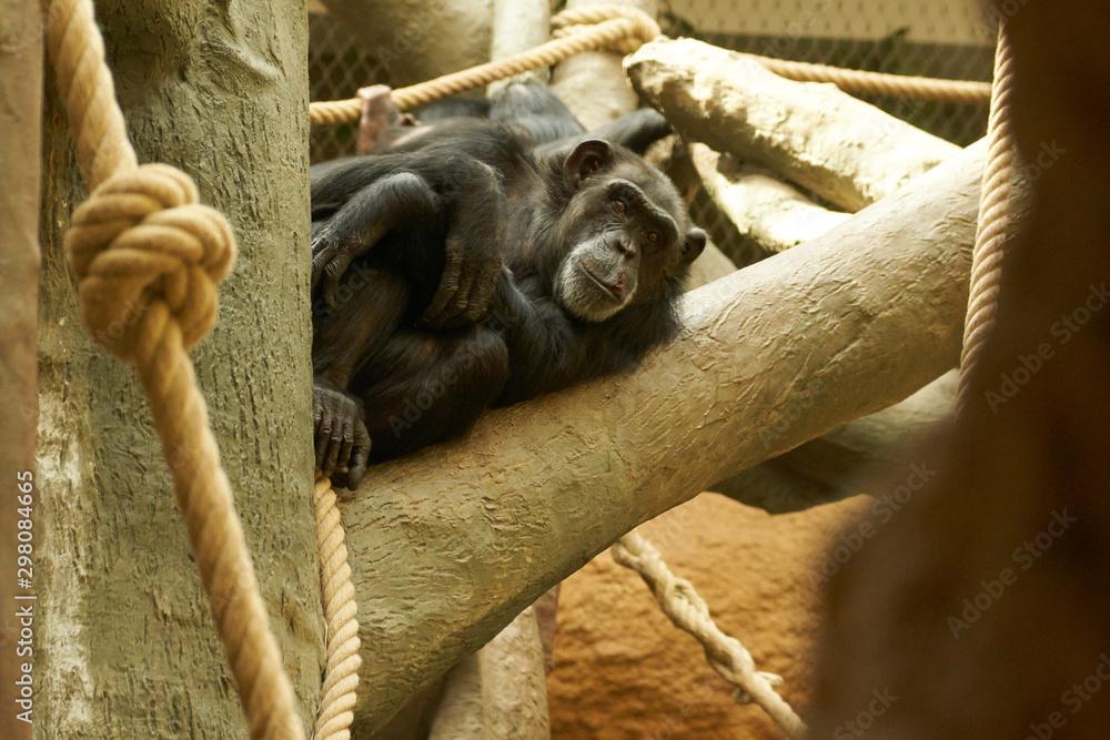 Fototapeta Animals in the zoo in Ostrava