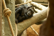 Animals In The Zoo In Ostrava