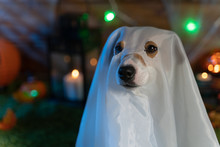 Dog On A Background Of Halloween