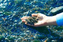 Shells Stones In Hand Water Sea Background. Seashell Background, Many Sea Shells.