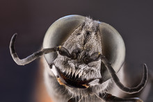 Close Up Of Fly Head