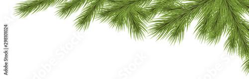 Fotografia  fir branch upper right corner
