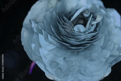 Fototapety, obrazy: teal flower