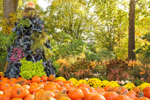 Landscape Fall Pyramid Shaped Gardenscape Consisting Of Ornamental Cabbages, Pumpkins And Yellow Mums