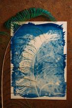 Peacock Feather Cyanotype