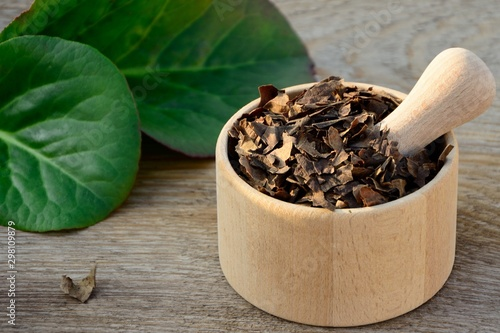 Fresh leaves and dried bergenia leaves in mortar on wooden background close up Canvas Print