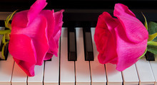 Two Pink Roses On Black And Wh...