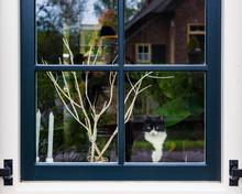 Cute Black And White Cat Sitting On Windowsill