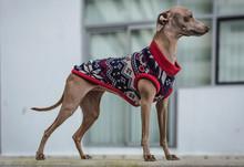 Funny Italian Dog Greyhound Pl...