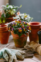 Winter Flowers On The Potting Bench