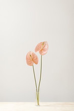 Vase With Two Light Pink Flowe...