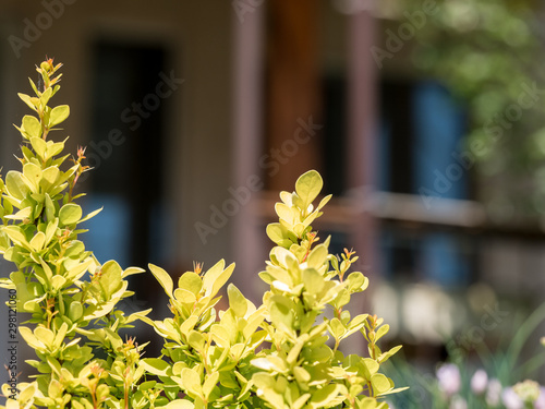 Printed kitchen splashbacks Cemetery Background image of garden flowers in a small town, with a house in the background.