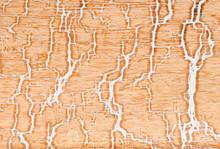 Split Wood Patterns, Close Up