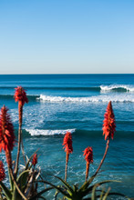 Waves Rolling Towards The Shore While Surf Glides The Swell