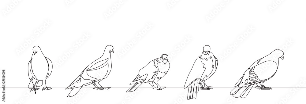 Fototapeta Pigeon One Continuous Line Vector Illustration Set of Five